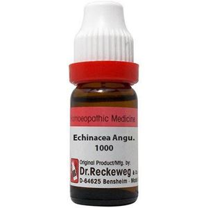 Picture of Echinacea Angust 1M 11ml